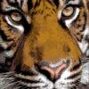 №6 Тигр 20-0938-НТ (2010-03) оригинал