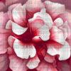 №19 Цветочная фантазия 23-2157-ЦБ (2010-07) сетка