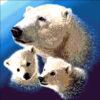 №53 Медведи 29-2116-НМ (2011-03) оригинал