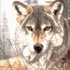 №62 Взгляд волка 32-2708-НВ (2011-05) оригинал