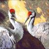 №79 Пара птиц 36-2040-НП (2011-10) оригинал