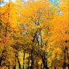 №86 Осень золотая 36-2442-НО (2011-11) оригинал