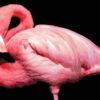 №97 Фламинго 37-2560-НФ (2012-02) оригинал