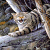 №216 Лесной кот 40-2915-НЛ (2014-07) оригинал