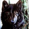 1232 Канадский волк 33-2576-НК