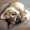 №393 Крошка кот 31-0784-НК (2020-08) превью