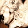 №398 Белые волки 25-2530-НБ (2020-10) превью