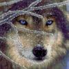 №24 Волк 26-1901-ВБ (2010-08) сетка